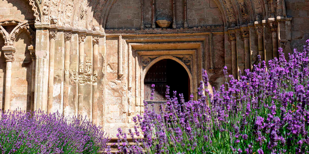 The Priory Entrance with Lavender